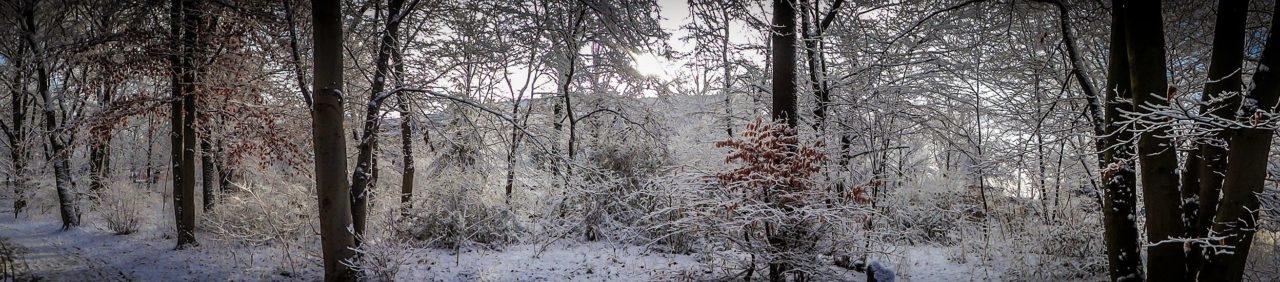 Hasenheide Winter Panorama