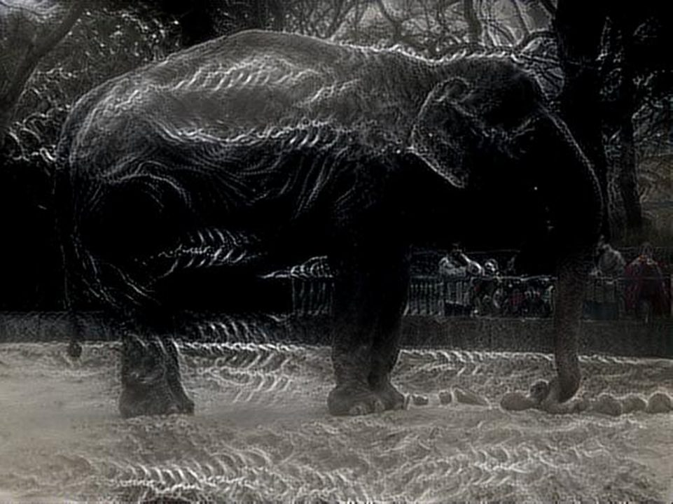 dreamscope Elefant Zoo Berlin 2