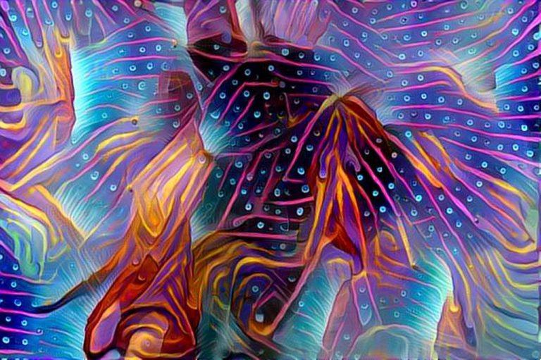 dreamscope Pflanze Pusteblume 3